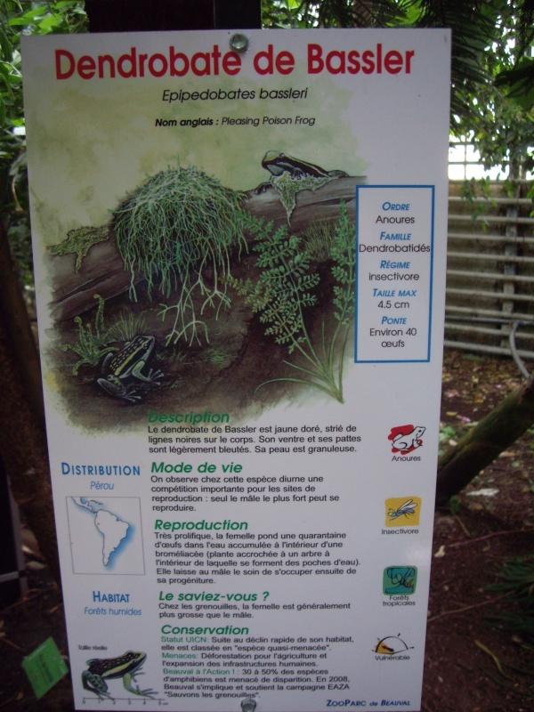 DENDROBATE DE BASSLER