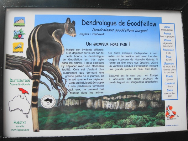 DENDROLAGUE DE GOODFELLOW