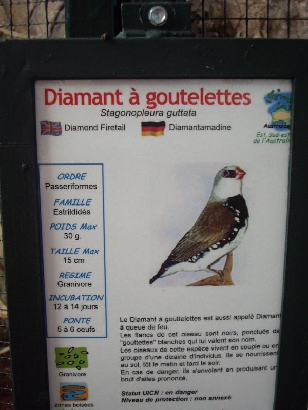 DIAMANT A GOUTELETTES