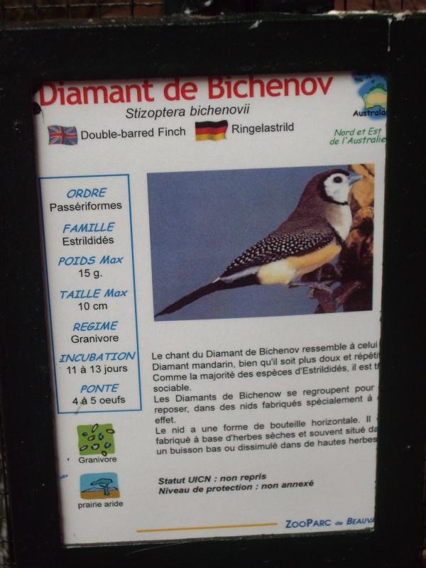 DIAMANT DE BICHENOV