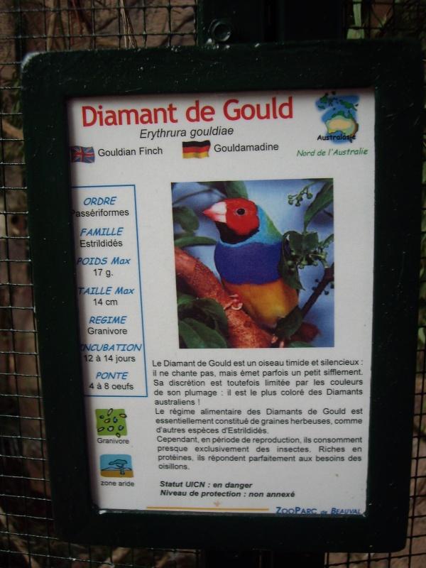 DIAMANT DE GOULD