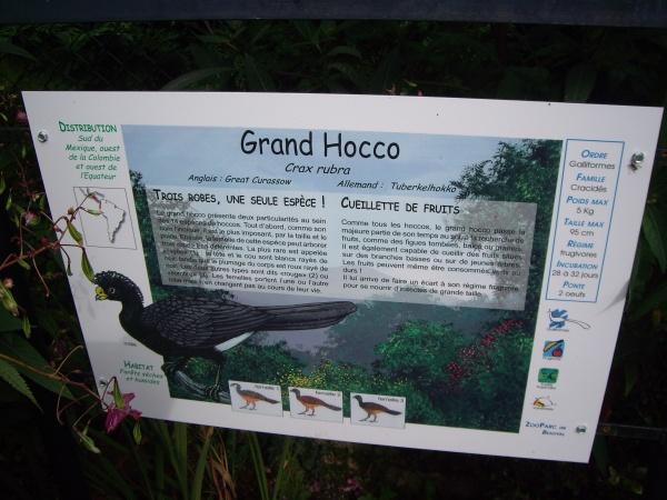 GRAND HOCCO