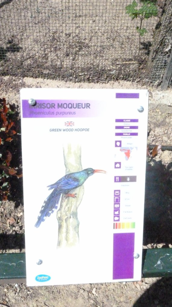 IRRISOR MOQUEUR
