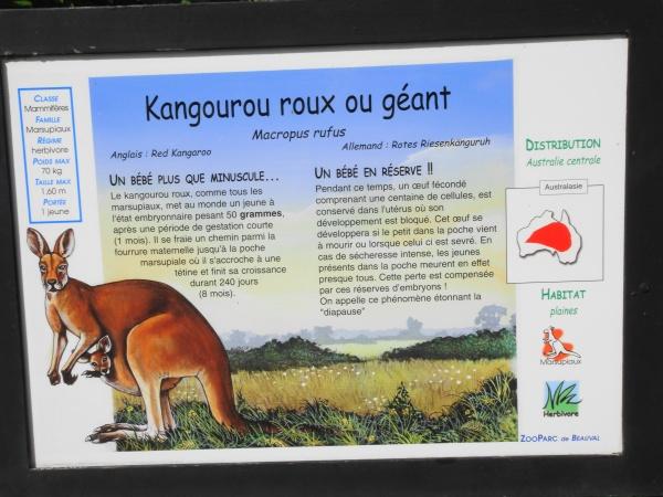KANGOUROU GEANT