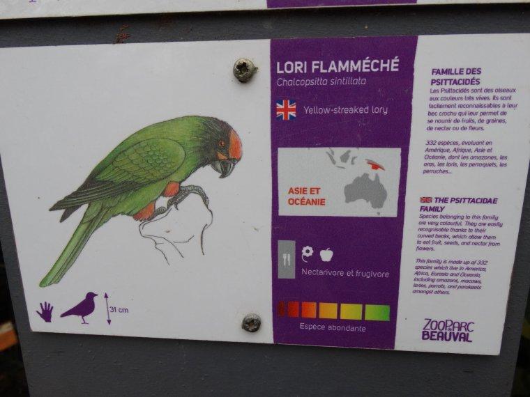 LORIQUET FLAMMECHE