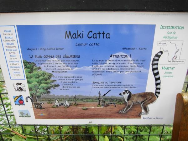 MAKI CATTA