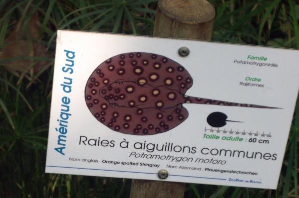 RAIE A AIGUILLONS COMMUNE