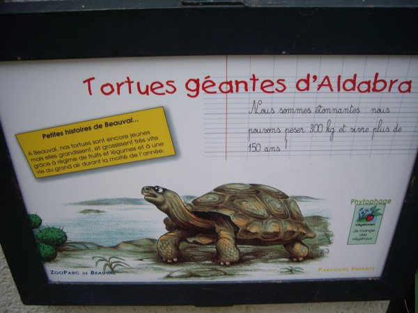 TORTUE GEANTE D'ALDABRA