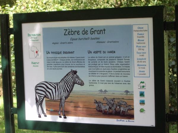 ZEBRE DE GRANT