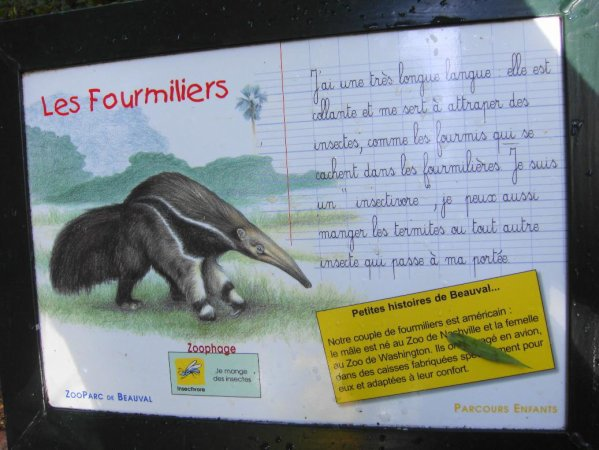 FOURMILIER GEANT OU TAMANOIR