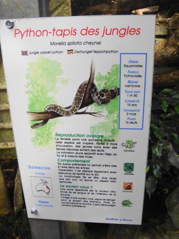 PYTHON TAPIS DES JUNGLES