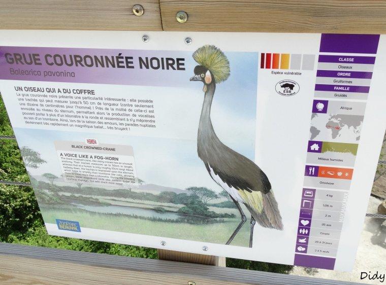 GRUE COURONNEE GRISE & NOIRE
