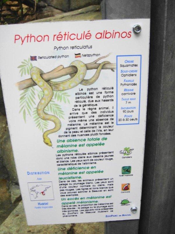 PYTHON RETICULE ALBINOS