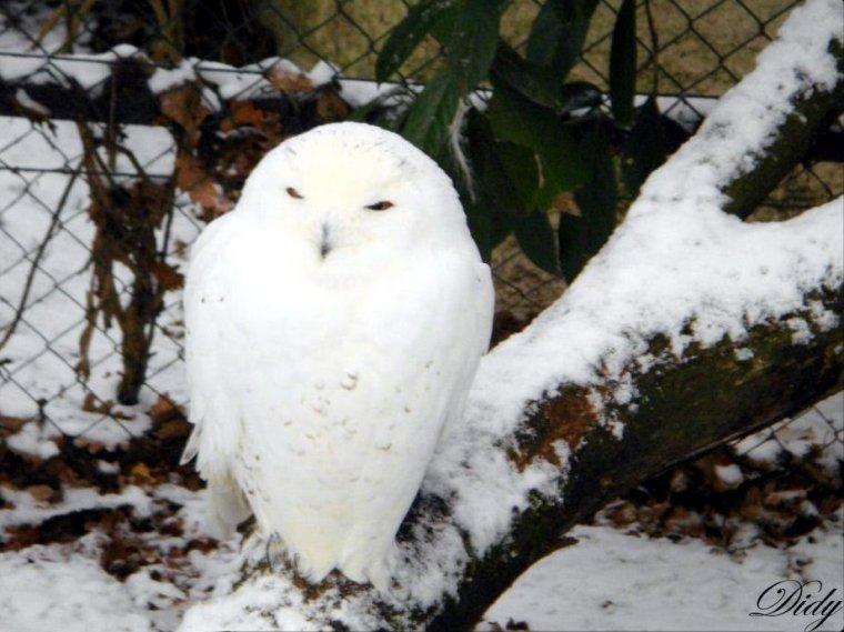 image animaux sous la neige