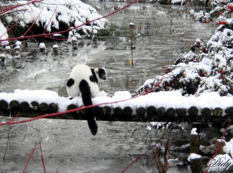 LES ANIMAUX SOUS LA NEIGE décembre 2009 (suite)