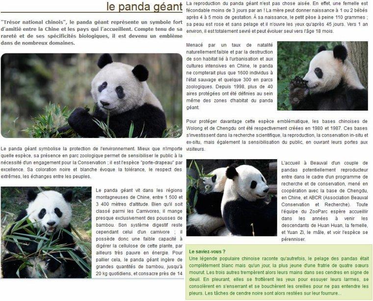 LE PANDA GEANT