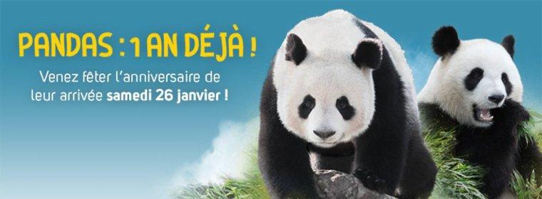 SPECIAL 1 AN DES PANDAS  - 26 janvier 2013