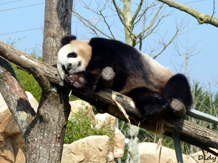 PANDA GEANT