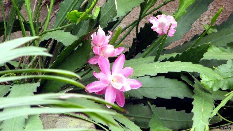 fleurs de la serre aux oiseaux de Beauval