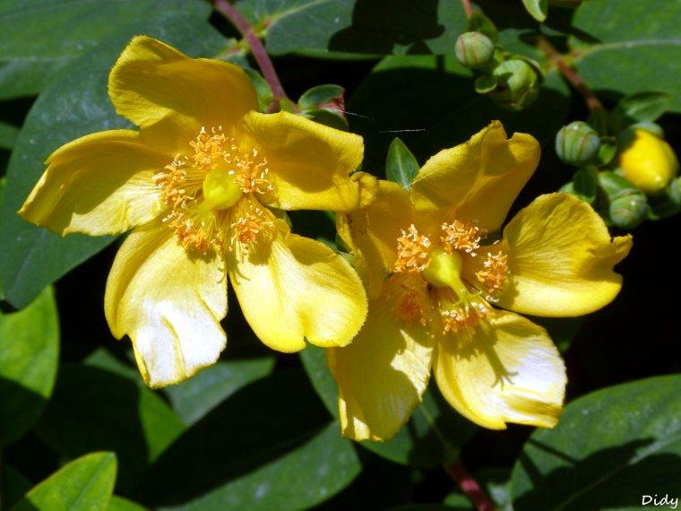 La flore des allées de Beauval - Juillet 2013