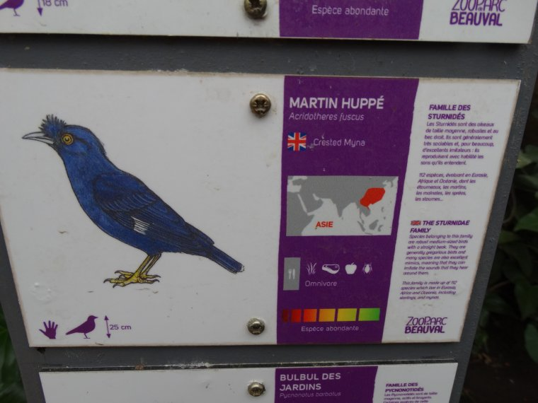 MARTIN HUPPE