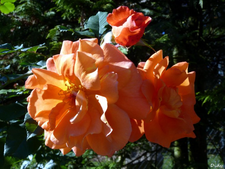 La flore des allées de Beauval - automne 2013