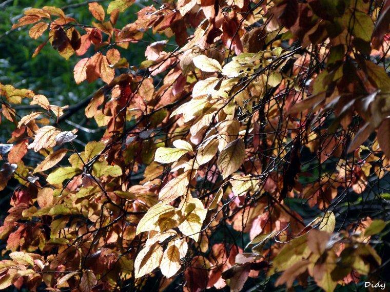 La flore des allées de Beauval - automne 2013 - Hiver 2014 (suite)