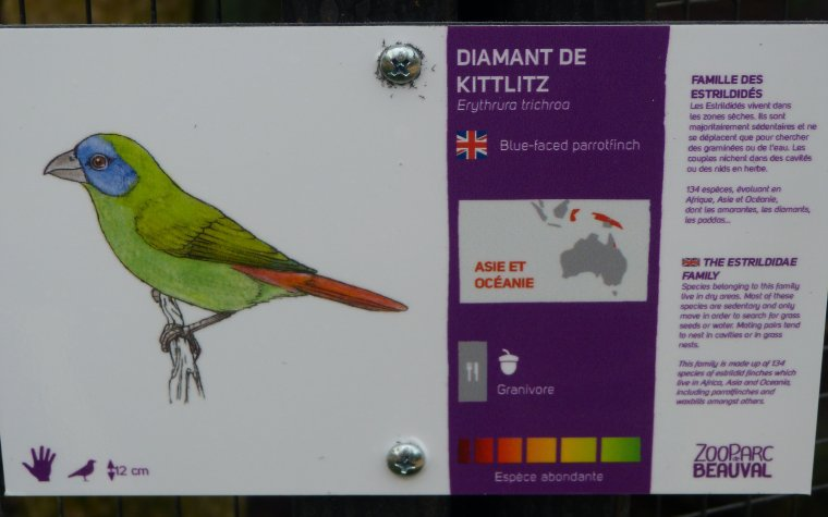 DIAMANT DE KITTLITZ