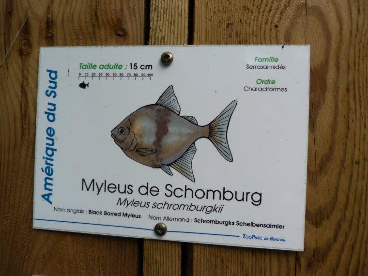 MYLEUS DE SCHOMBURG