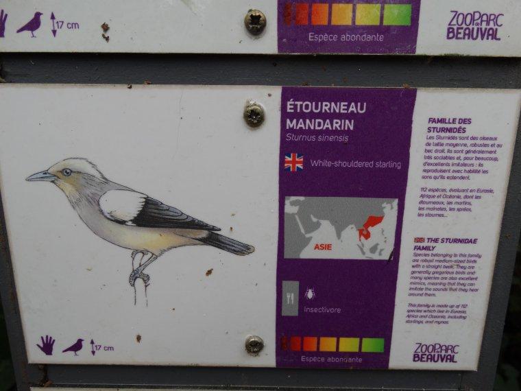 ETOURNEAU MANDARIN