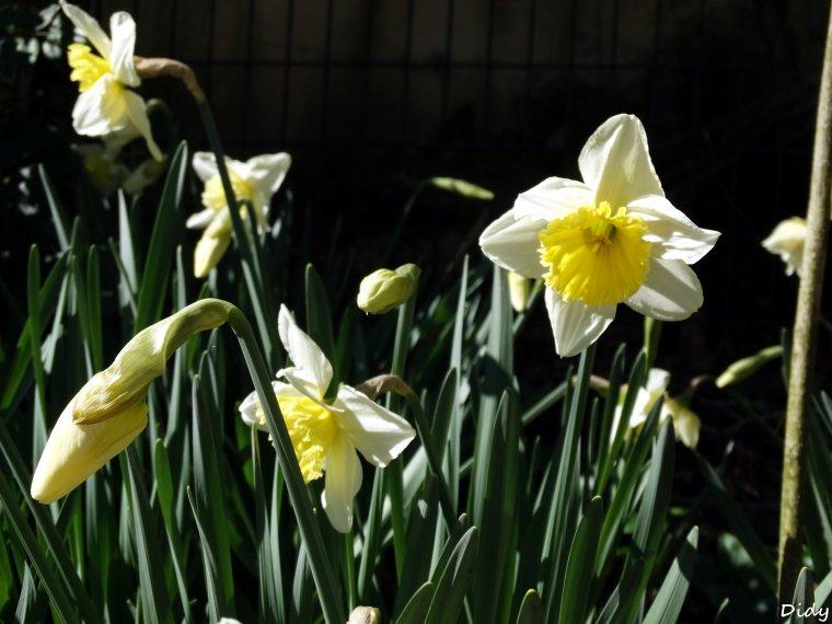La flore des allées de Beauval - Hiver Printemps 2014 (suite)