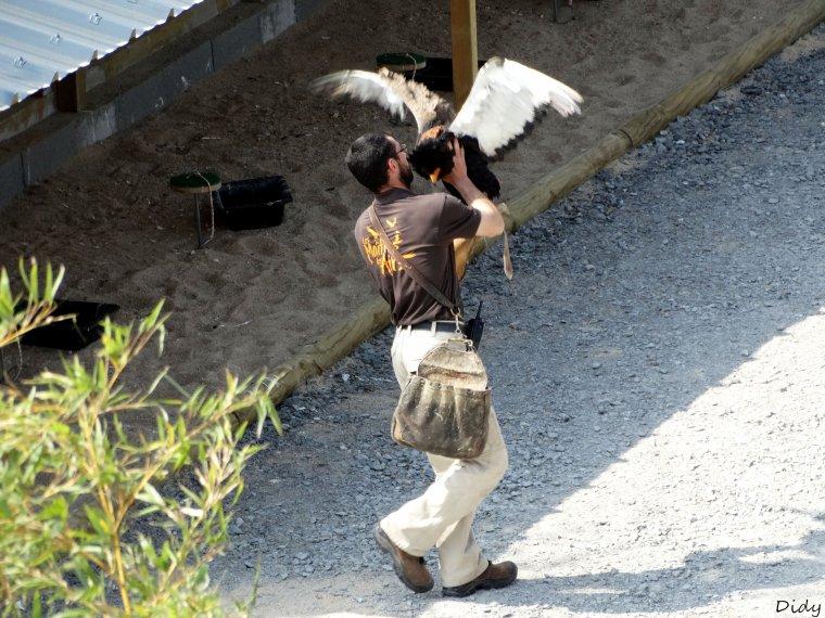 """nouveau spectacle d'oiseaux 2014 """"les maîtres des airs"""", 1ère représentation le 12 avril 2014 suite 2"""