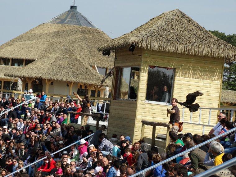 """nouveau spectacle d'oiseaux 2014 """"les maîtres des airs"""", 1ère représentation le 12 avril 2014 suite 3"""