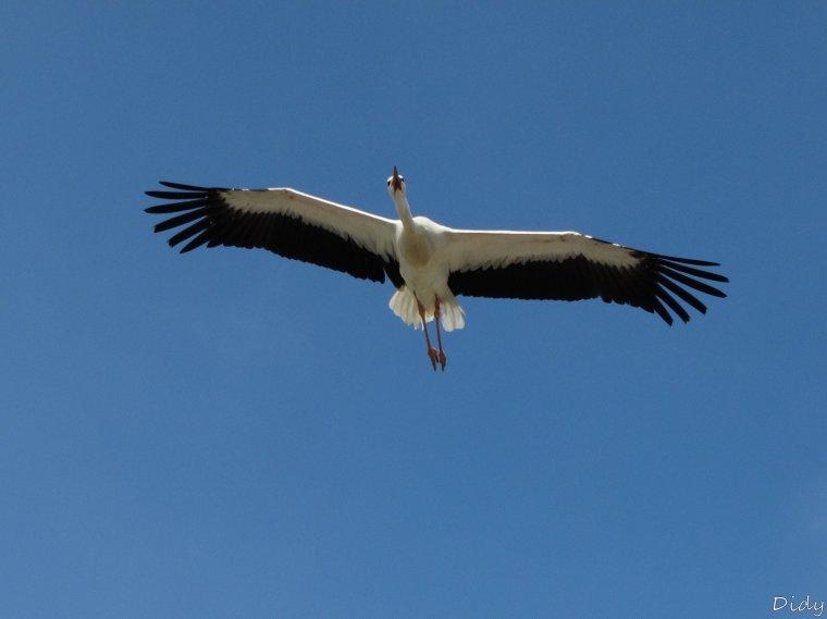 """nouveau spectacle d'oiseaux 2014 """"les maîtres des airs"""", 1ère représentation le 12 avril 2014 suite 5"""