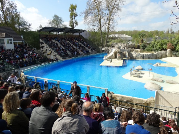spectacle d'otaries - vu le 13 avril 2014