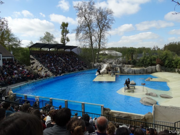 spectacle d'otaries - vu le 13 avril 2014 suite