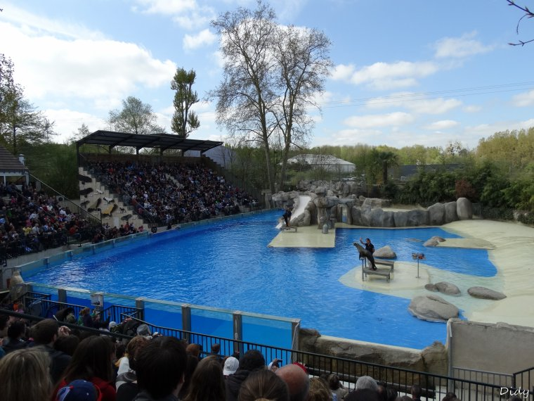 spectacle d'otaries - vu le 13 avril 2014 suite 4