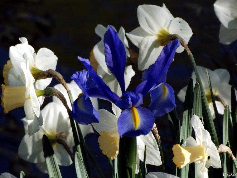 La flore des allées de Beauval - Printemps 2014 suite 2