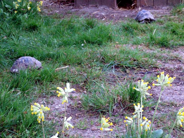 La flore des allées de Beauval - Printemps 2014 suite 3