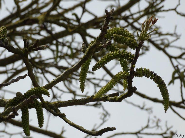La flore des allées de Beauval - Printemps 2014 suite 4