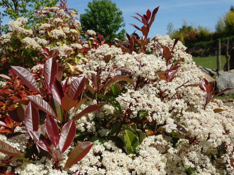 La flore des allées de Beauval - Printemps 2014 suite 5