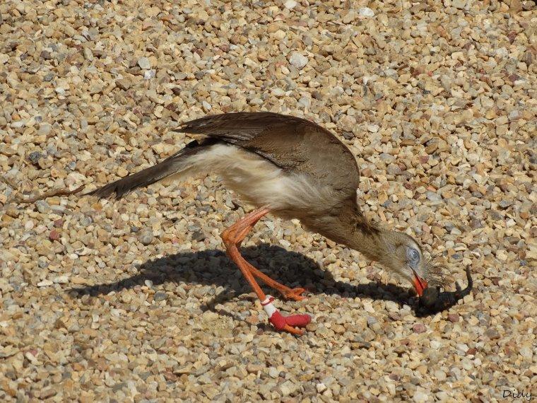 """nouveau spectacle d'oiseaux 2014 """"les maîtres des airs"""", le 04 Mai 2014 suite"""