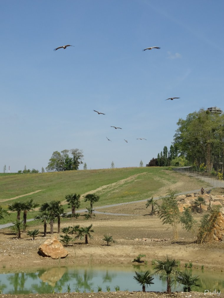 """nouveau spectacle d'oiseaux 2014 """"les maîtres des airs"""", le 04 Mai 2014 suite 5"""