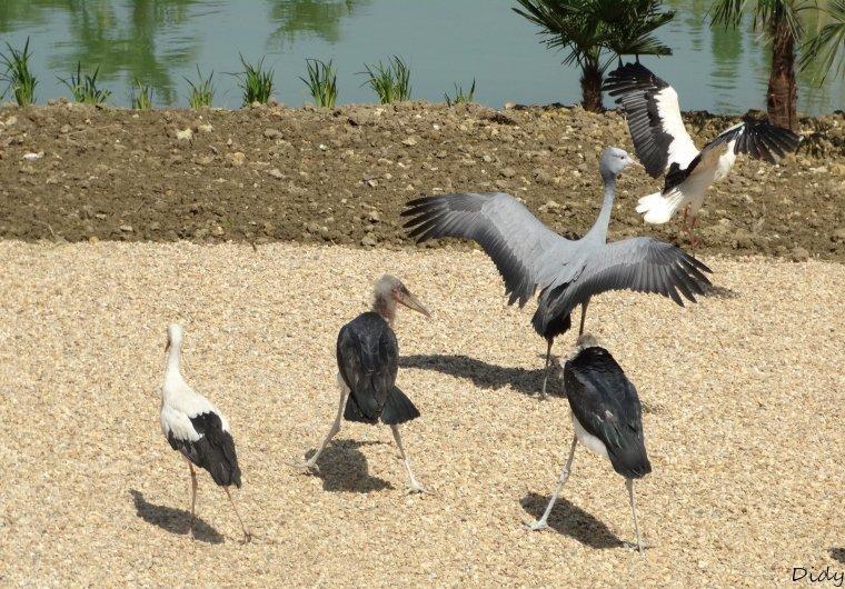 """nouveau spectacle d'oiseaux 2014 """"les maîtres des airs"""", le 04 Mai 2014 suite 7"""