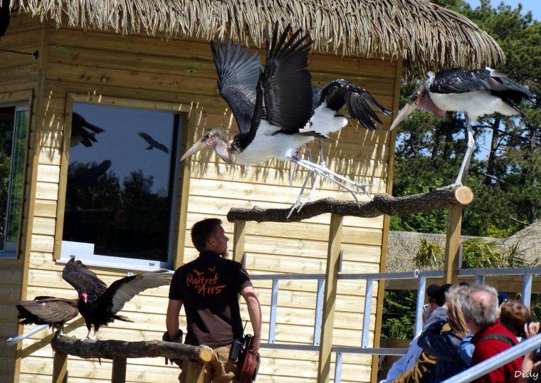"""nouveau spectacle d'oiseaux 2014 """"les maîtres des airs"""",le 15 Mai 2014 suite 4"""