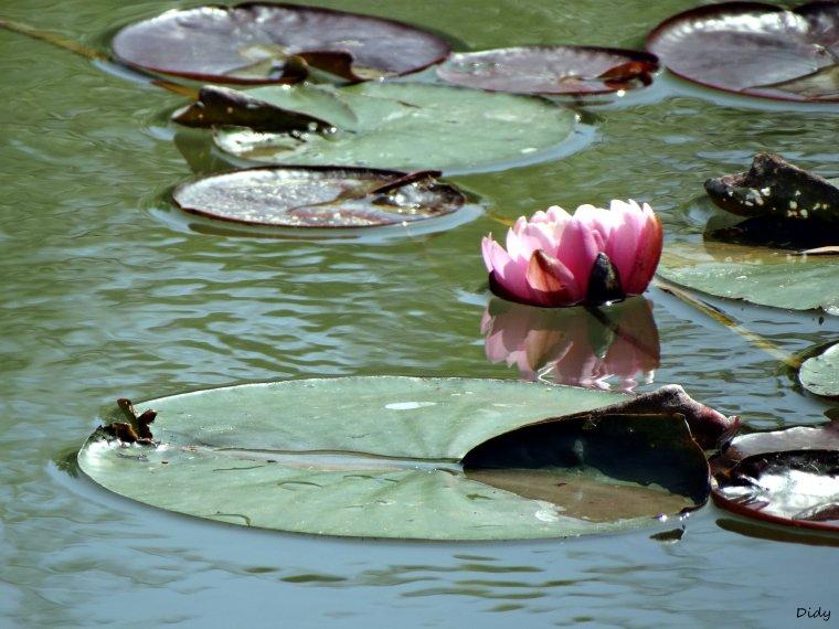 La flore des allées de Beauval - Printemps 2014 suite 7