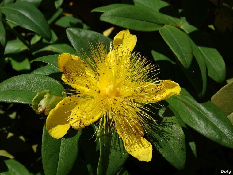 La flore des allées de Beauval - Printemps 2014 suite 8