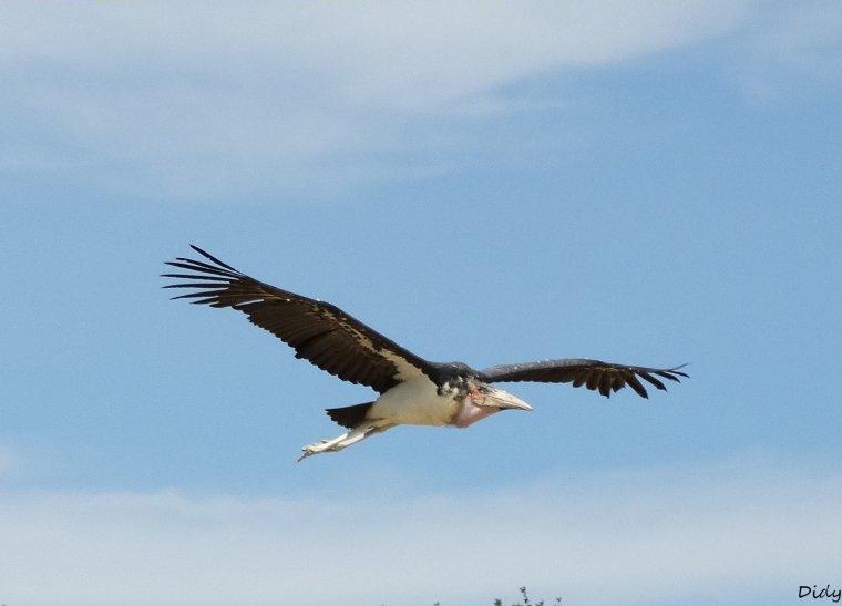 """nouveau spectacle d'oiseaux 2014 """"les maîtres des airs"""", le 06 Juin 2014 suite 5"""