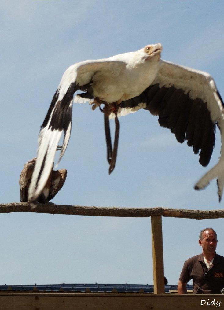 """nouveau spectacle d'oiseaux 2014 """"les maîtres des airs"""", le 06 Juin 2014 suite 7"""