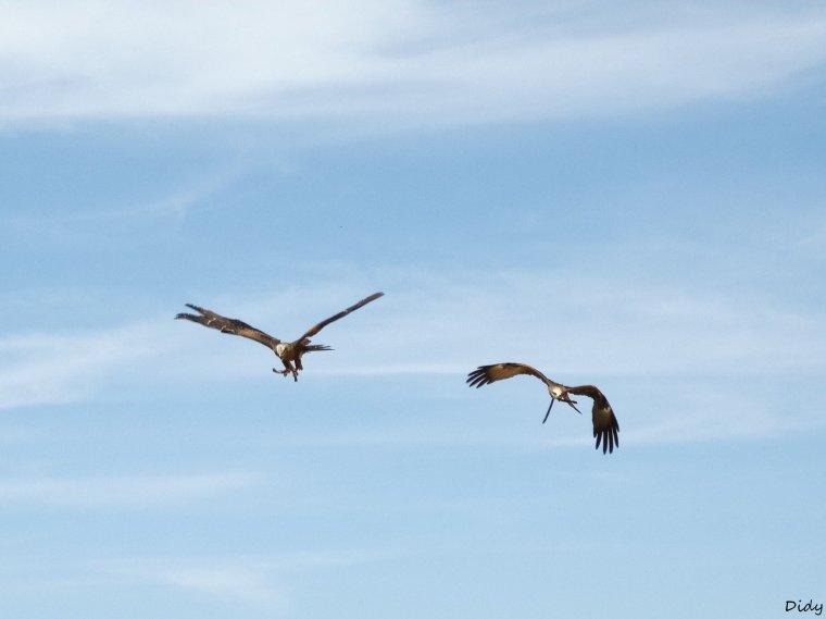 """nouveau spectacle d'oiseaux 2014 """"les maîtres des airs"""", le 06 Juin 2014 suite 8"""